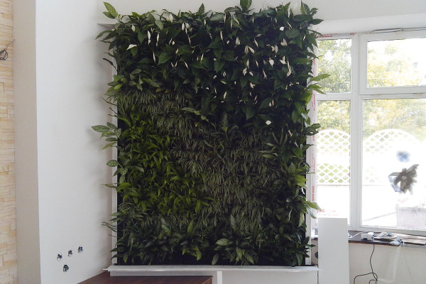Зеленая стена в ресторане