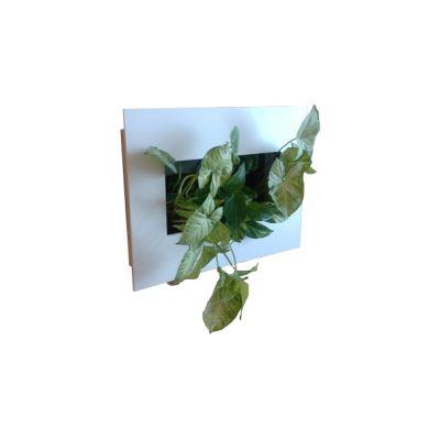 Фитокартина из живых растений 45 см