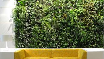 Изобретение зелёных стен