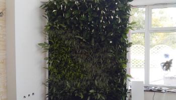 Пример вертикального озеленения cybergrow - зеленая стена в ресторане