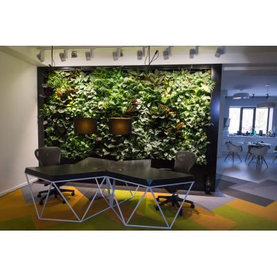 Фитостена для вертикального озеленения помещений 10 метров
