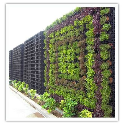 Вертикальное озеленение улиц