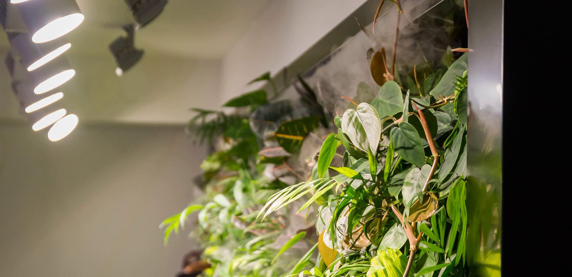 Фитостены из живых растений